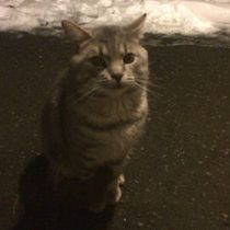 cat found in RDP