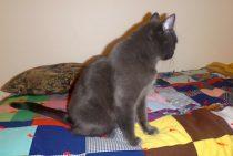 cat found gr