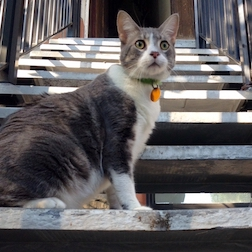 cat lost in the Mile End