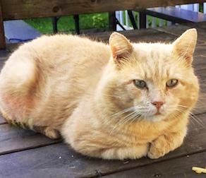 cat lost Vieux La Prairie