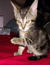 kitten found in Candiac