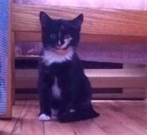 kitten found in Drummondville