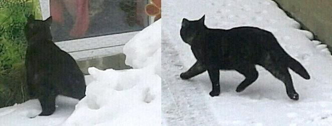 cat found Lachine