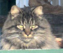 cat lost in SJSR