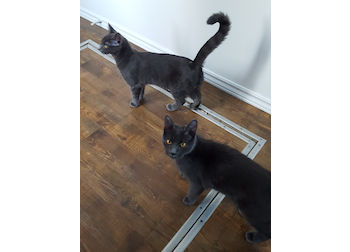 2 cats found in Anicet