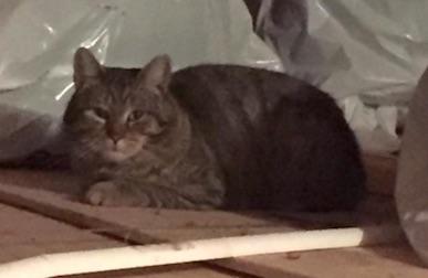 cat found Pierrefonds