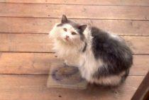 cat found in St Lambert