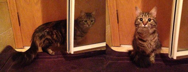 cat found in St Leonard