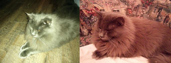 cat found in Ste Sophie
