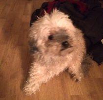 dog found Verdun