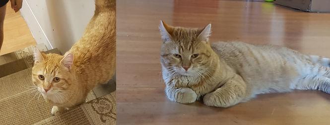 cat found in Vimont