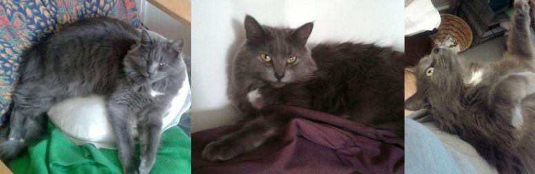cat lost in Petite Patrie