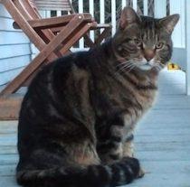 cat lost in Ste Adele