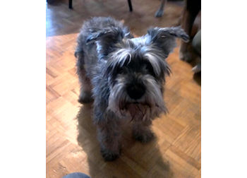 dog found Chateauguay