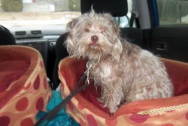 dog found in Pierrefonds