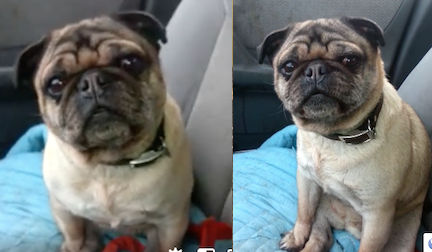 dog found in St Calixte