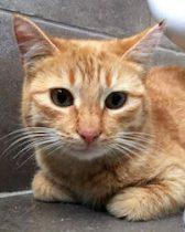kitten found in St-Donat