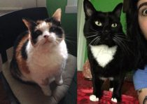 2 cats lost Verdun