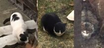 3 cats found in St Leonard