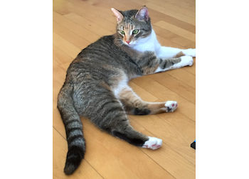 cat found in Candiac