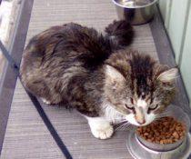 cat found in St Jean sur Rich tw