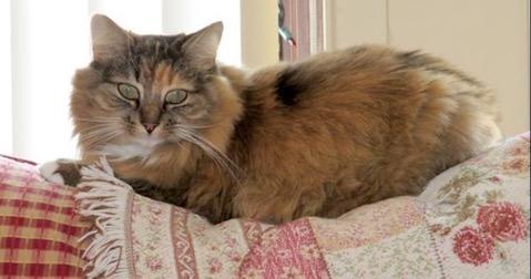 cat lost in Rigaud