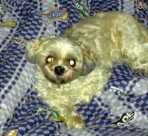dog found in Mascouche