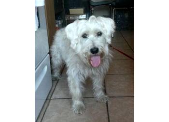 dog found in RDP
