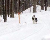 dog found in Rigaud