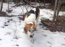 dog found in St-Anicet