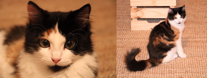 kitten lost in Tetreaultville