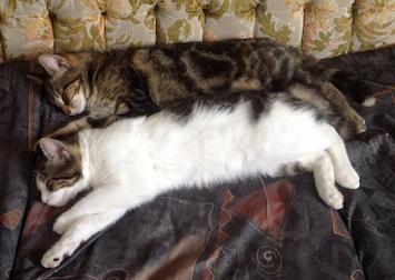 Polo and Tigress