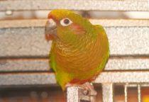 bird lost in Rosemont