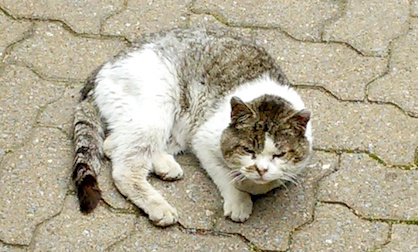 cat found Laval des Rapides