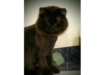 cat lost in Bois des Filion