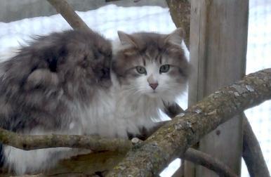 cat lost in NDG