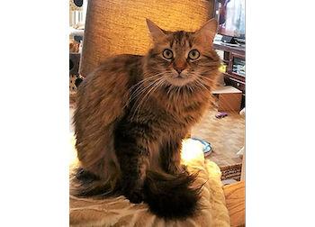 cat lost in Pierrefonds