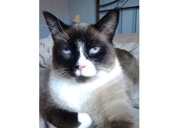 cat lost in Tetreaultville
