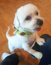 dog found in Cartierville