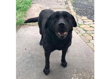 dog found St Césaire