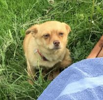 dog found in St Isidore