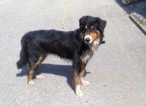 dog found in St Jerome