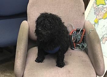 dog found in Ville St Pierre