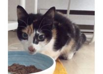 kitten found in Laval