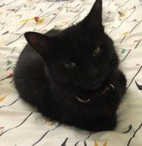kitten found in St Henri