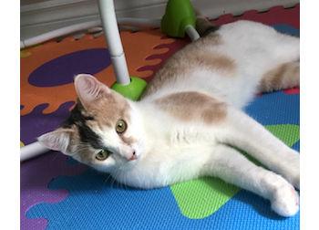 kitten lost in Milles Iles
