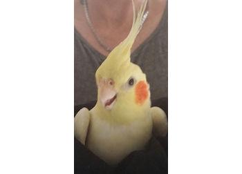 bird found in Montreal North