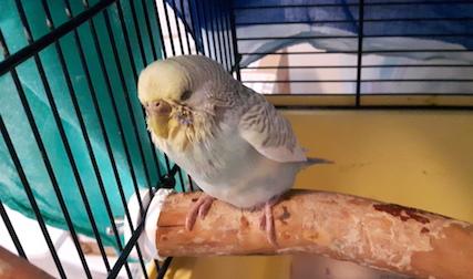 bird found VSL