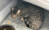 cat found Epiphanie
