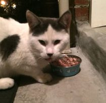 cat found in Rosemont